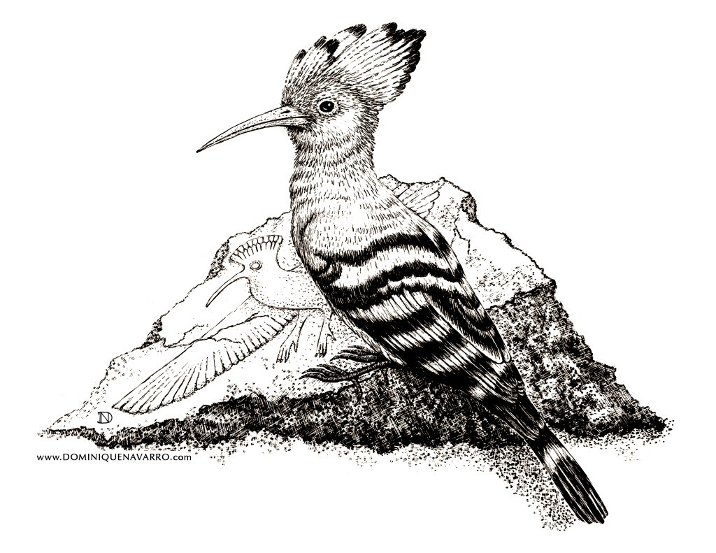 Hoopoe Artwork