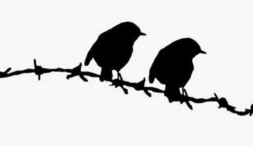 birds on barbed wire